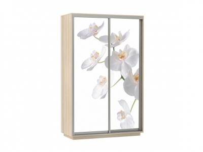 Шкаф-купе Фото Хит Орхидея Ясень шимо светлый